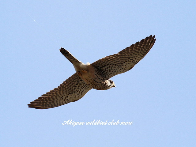 IMG_5545 chougen-2