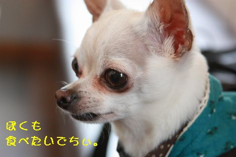 IMG_88010.jpg