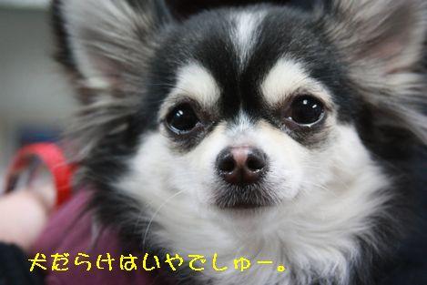 IMG_89100.jpg