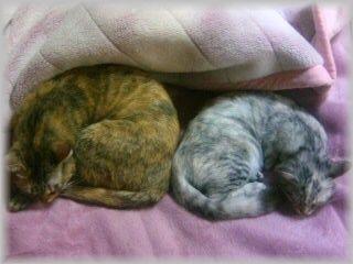 線対称なネコ