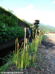 02.町切水車(2009年9月15日)