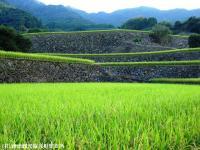 08.日本一の石積み周辺(2009年9月15日)