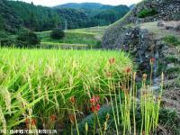 11.日本一の石積み周辺(2009年9月15日)