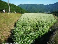 02.中山峠(2009年9月25日)