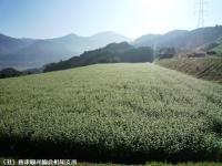 03.中山峠(2009年9月25日)