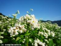 04.中山峠(2009年9月25日)
