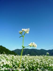 08.中山峠(2009年9月25日)