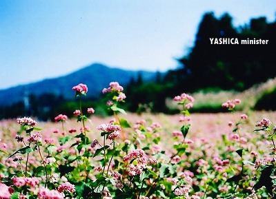 20091006_YASHICA006.jpg