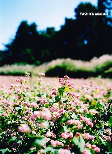 20091006_YASHICA010.jpg