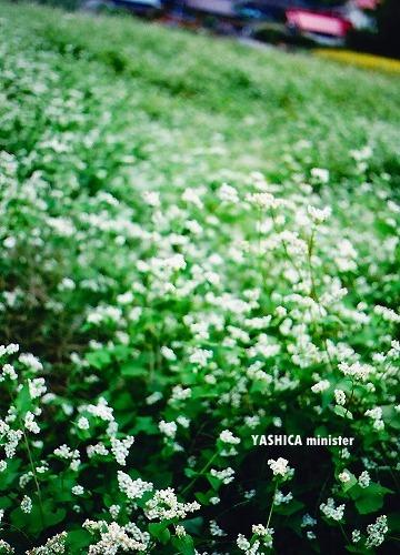 20091006_YASHICA013.jpg