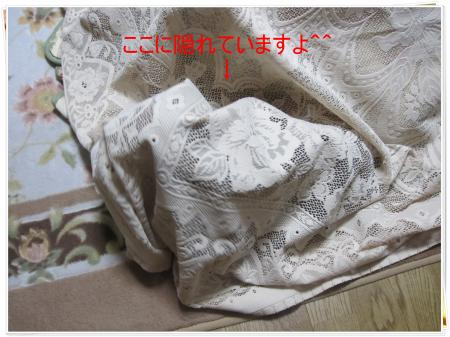 IMG_1363_convert_20091106190718.jpg