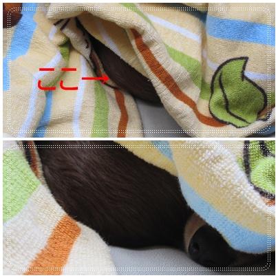 cats_20091015220617.jpg