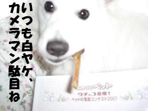 CIMG1863白ヤケ