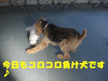 CIMG2772    負け犬
