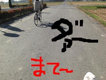 CIMG1134k.jpg