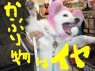 CIMG1501kkkk.jpg