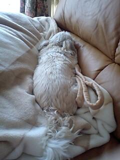 寝てるソファ