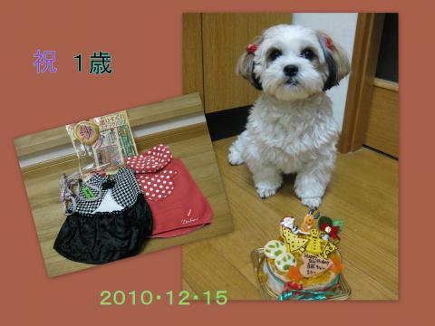 2010_12_141_convert_20101216163927.jpg