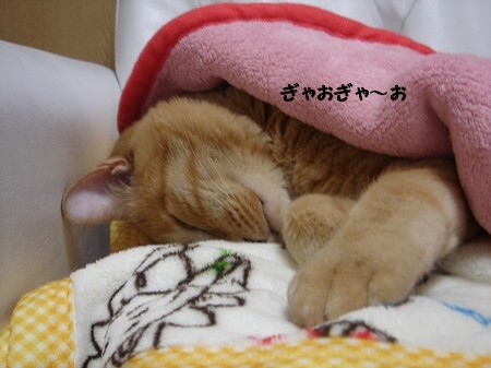 ネコ科?ねこか? (1)