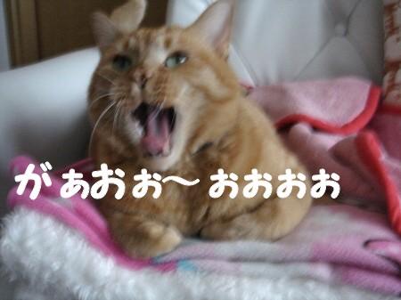 しっぽ上げ? (7)
