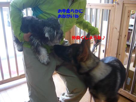 ジェード・武蔵