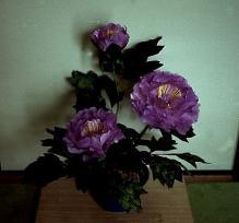 10-06 芍薬