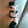 こんな小さい頃あったねぇ3猫一緒
