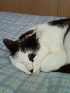 ミヌはベッドでzzz