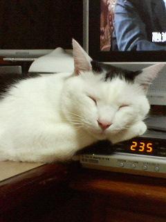 眠いでんなぁ~  ほんとうにぃ