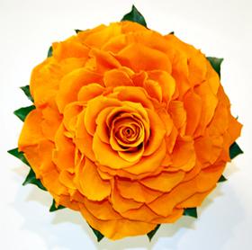 rosemeria.jpg