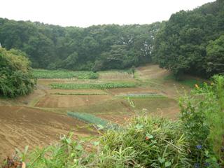 4.秋の畑