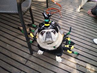 ふぐ毒蜘蛛モモちゃんから1