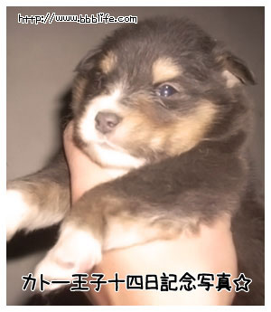 kato_04.jpg