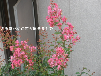 P7250430.jpg