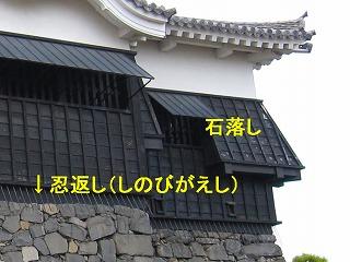 IMG_7219t-kumamotojyoum.jpg