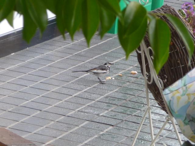 小鳥 003