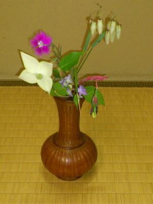 110520皐月茶花