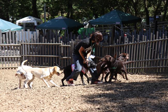 30犬使いネネゴン