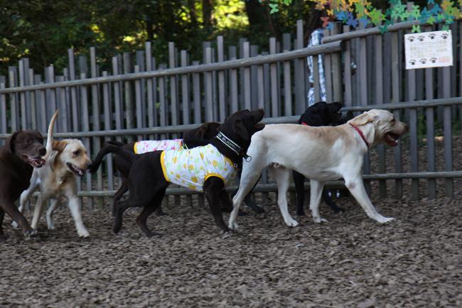 31犬使いママゴン