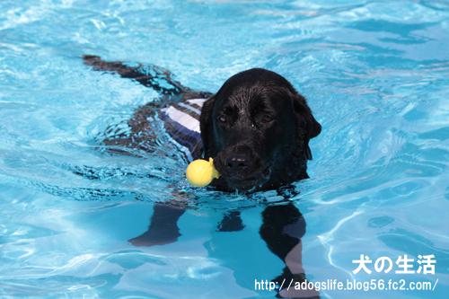 12ゼロ泳ぐ