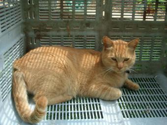 2007・9・22猫