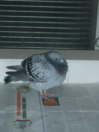 2007・10・29鳩2