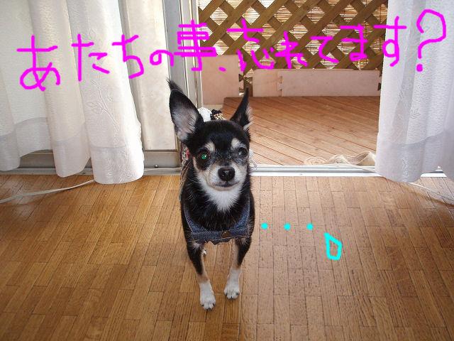 PA180129_20071029102449.jpg