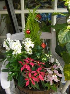 071212 植物