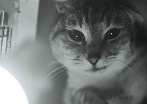 猫モノクロ写真08.03.09