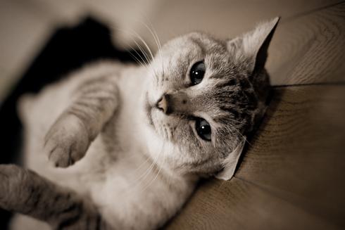猫写真08.02.28