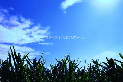 IMG_1468m.jpg