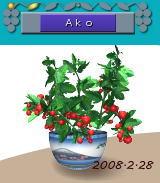 0228_20080228081227.jpg
