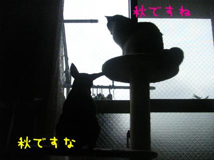 20071020213342.jpg