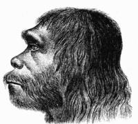 200px-Neanderthaler_Fund.jpg
